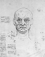 Study on the proportions of head and eyes, vinci