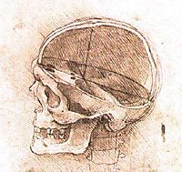 View of a Skull, vinci