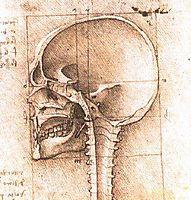 View of a Skull, vinci