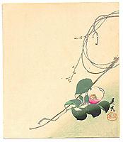 Camellia, zeshin