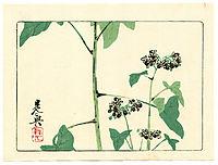 Flowering Plant - Hana Kurabe, 1878, zeshin
