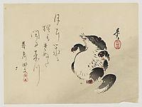 Racoon-dog (Tanuki), zeshin